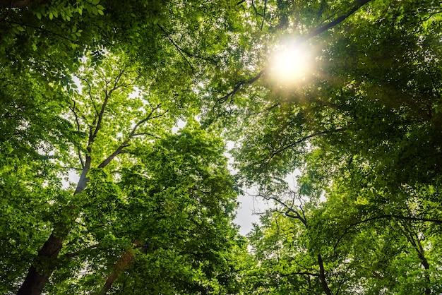Летний зеленый лес