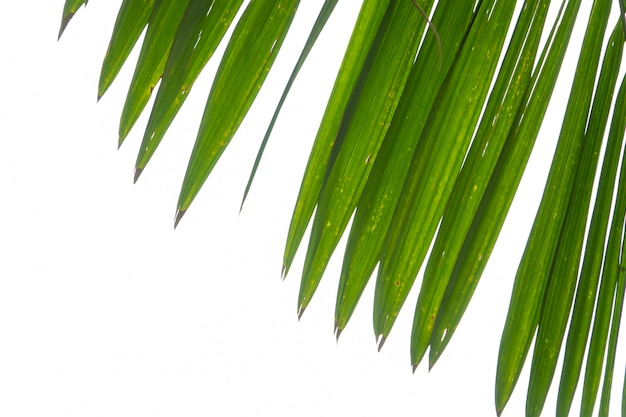 Summer green palm leaf