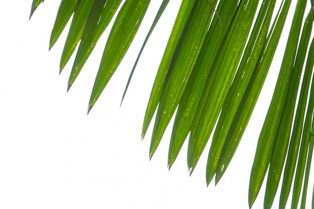Summer green palm leaf