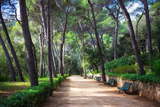 ベンチと大きな松の木がある夏の緑豊かな公園