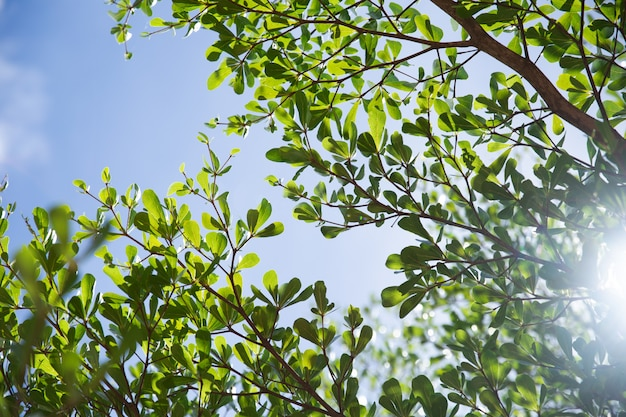 Summer green tree blue sky natural fresh air background with bright sunlight