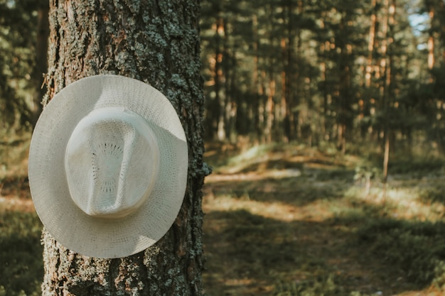Summer hat on a tree branch in the summer forest. outdoor recreation, tourism.