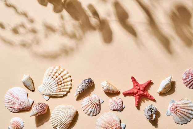 Summer holiday table. imitation of beach sand withseashell, starfish, with deep shadows from the leaves and trees. sunny day. flat lay, top view copy space for your text.