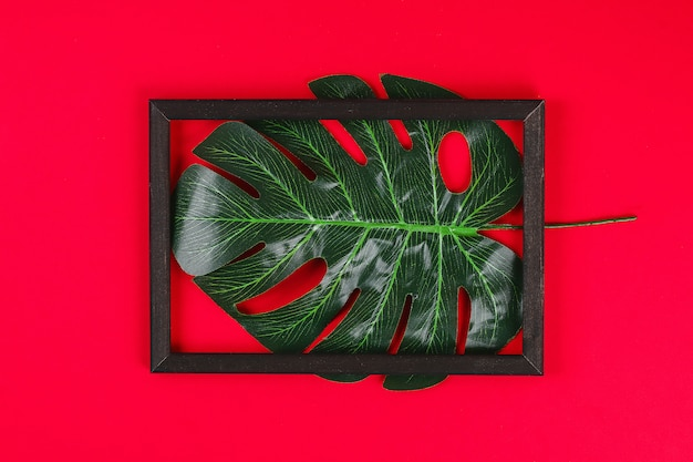 Summer ideas concept tropical leaf white black frame border on red background.
