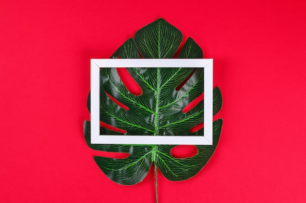 Summer ideas concept tropical leaf white black frame border on red surface.