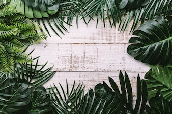 Summer ideas concept with tropical leaf frame border
