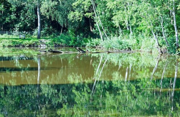 Летнее озеро с отражением деревьев на поверхности воды.