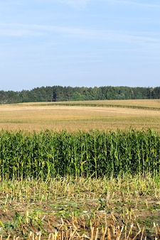 Summer landscape on an agricultural field