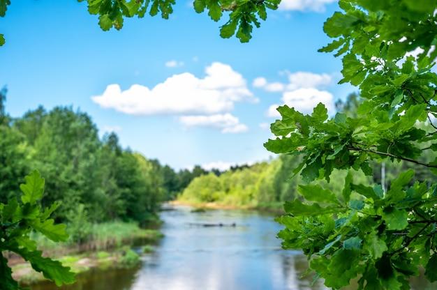 여름 풍경입니다. 신선한 녹색 오크 잎에 초점. 숲 강과 구름 배경 흐리게에 푸른 하늘에. 복사 공간