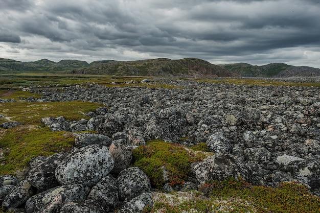 Летний пейзаж зеленой полярной тундры в окрестностях териберки