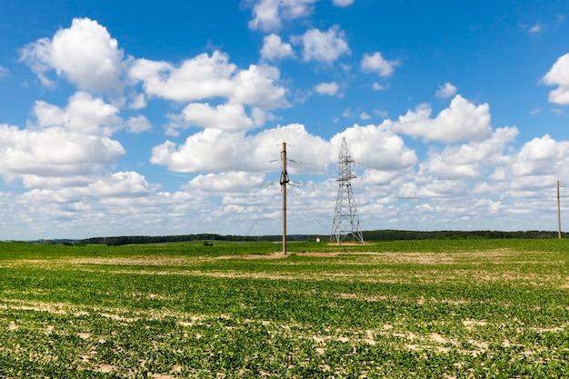 사탕 무와 농업 분야에 여름 풍경