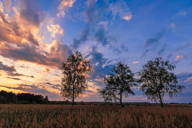 Summer landscape of three birches in a field at sunset or dawn