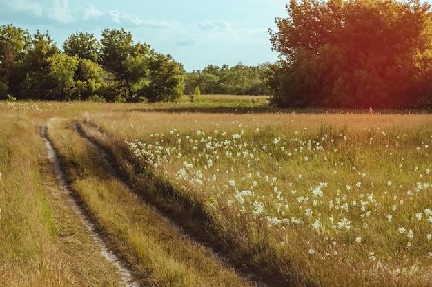 フィールドの田舎道で夏の風景