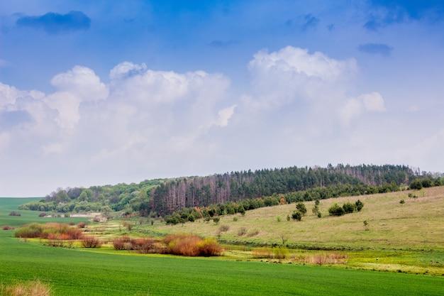 フィールド、森、白い雲と青い空と夏の風景