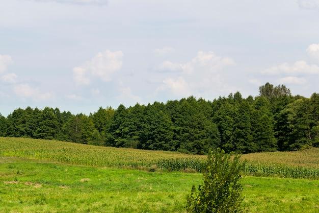 잔디의 숲과 흐린 하늘 여름 풍경