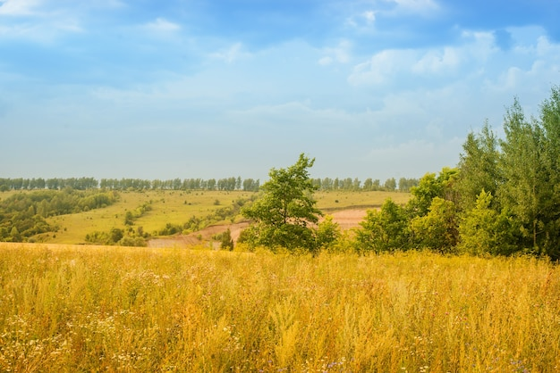 広大な黄色い畑のある夏の風景