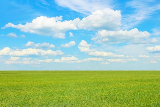 무한한 필드와 구름과 하늘을 볼 수있는 여름 풍경