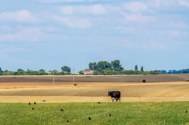 Летний пейзаж с сельскохозяйственными угодьями и коровой на лугу