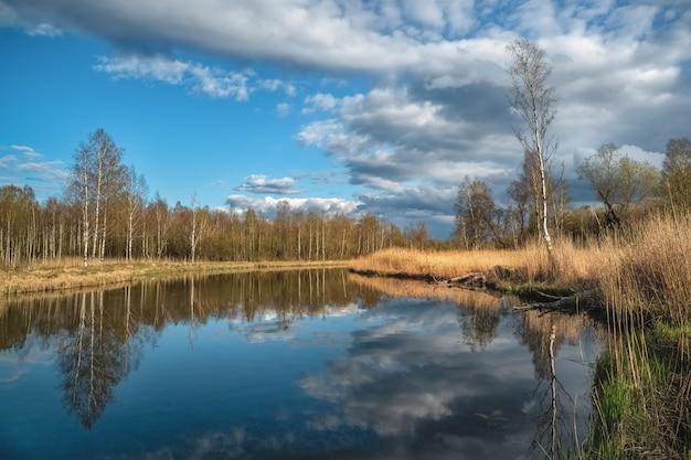 古い池、海岸と反射の木と夏の風景