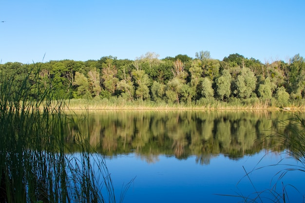 Summer landscape with a blue transparent lake and forest in the background, selective focus