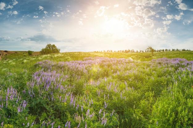 Летний пейзаж с цветочным лугом и солнечными лучами