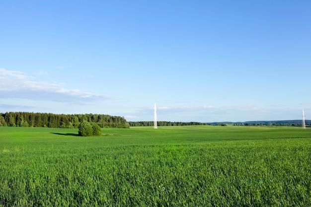 Летний пейзаж с травой на сельскохозяйственном поле, голубое небо в солнечную погоду и высоковольтные электрические столбы