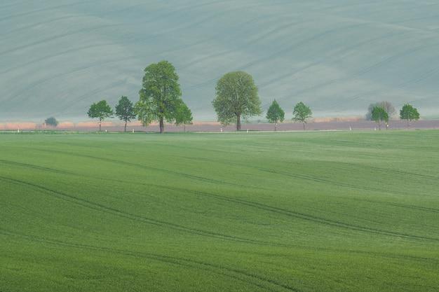녹색 필드와 나무와 여름 풍경