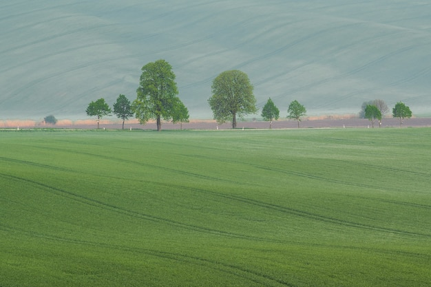 Summer landscape with green fields and trees