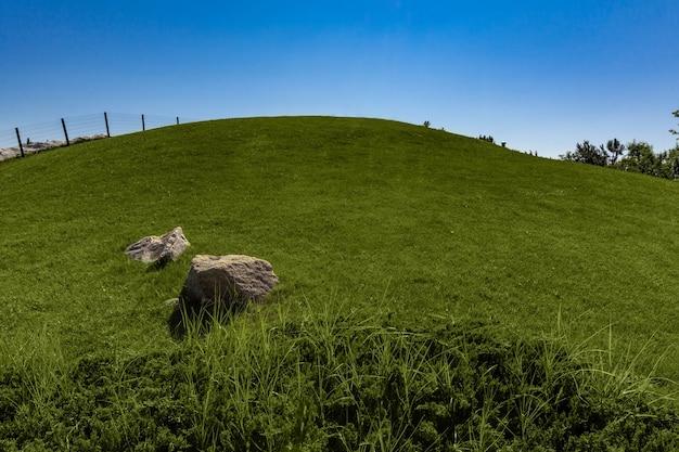 푸른 하늘 배경에 언덕에 푸른 잔디와 여름 풍경