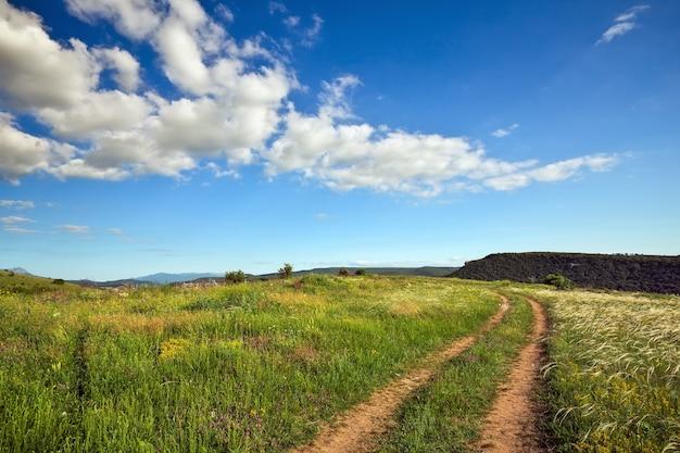 緑の草、道路、木々と夏の風景