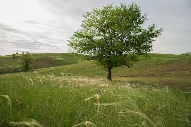 Летний пейзаж с зеленым деревом и кузнечиком