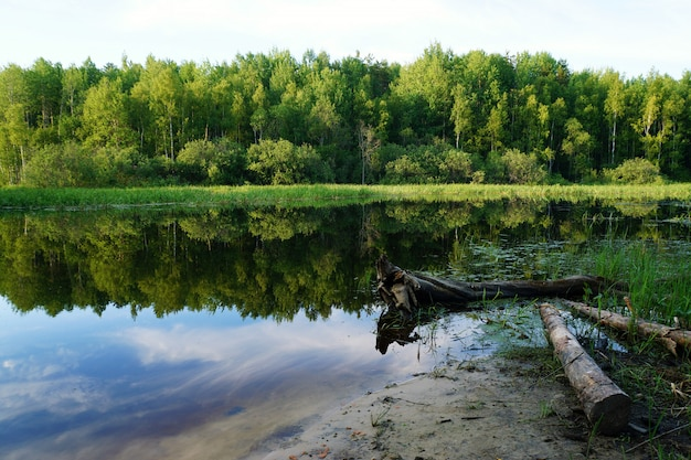 Summer landscape with green trees reflected in the river.