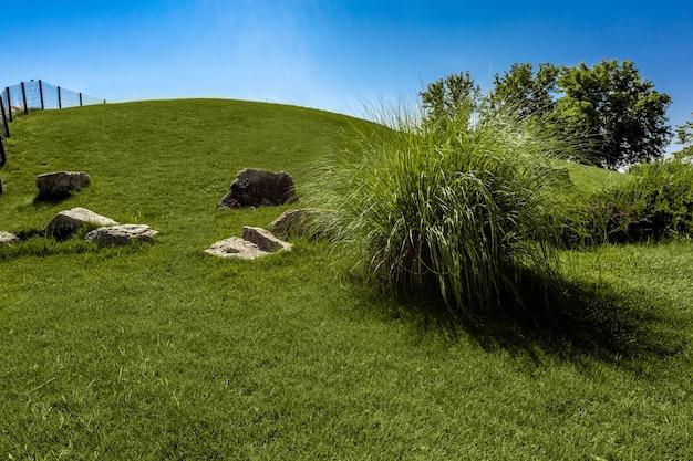 푸른 하늘을 배경으로 푸른 풀로 덮인 언덕이 있는 여름 풍경