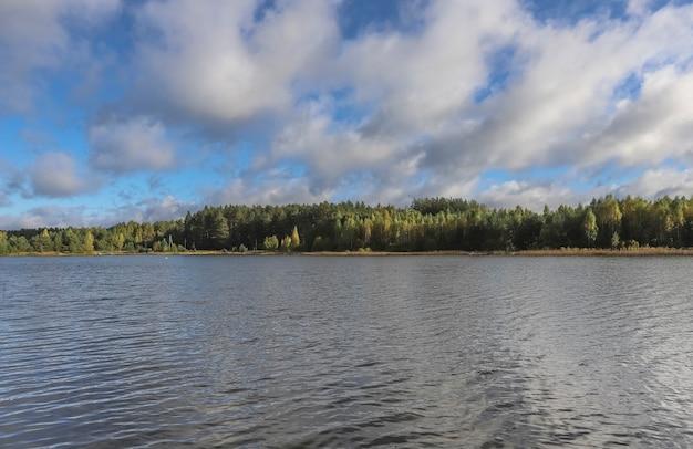 Летний пейзаж с озером трава лес голубое небо в дневное время