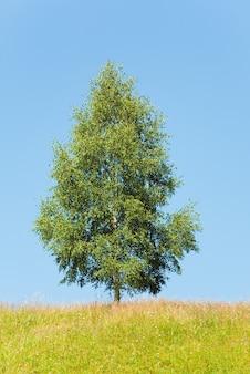 空の背景に孤独な木と夏の風景