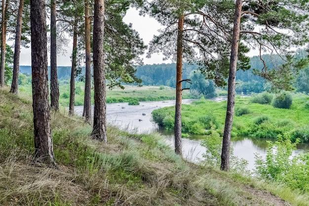 川の急な土手に松の木がある夏の風景