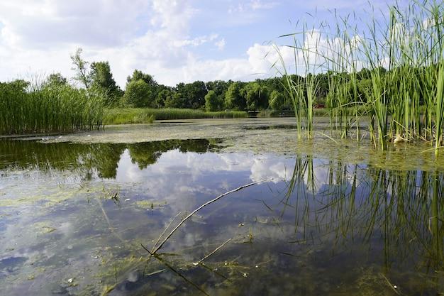 森の中の小さな湖のある夏の風景シニーサンが湖に映る