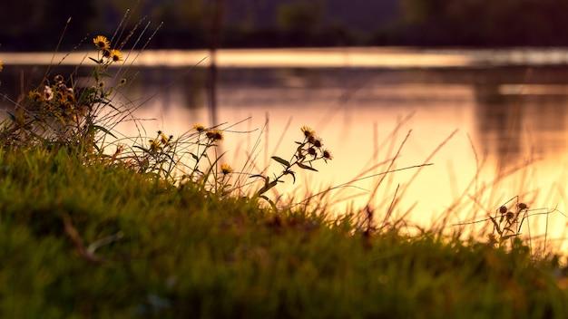 金色の色調で日没時に川のある夏の風景