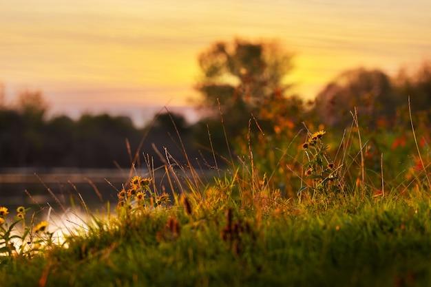 黄金色の日没時の川と夏の風景