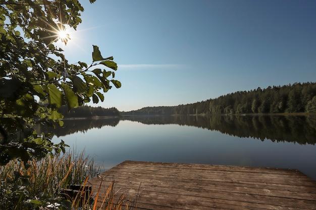 Летний пейзаж с деревом лесное озеро ясное небо и солнечные лучи