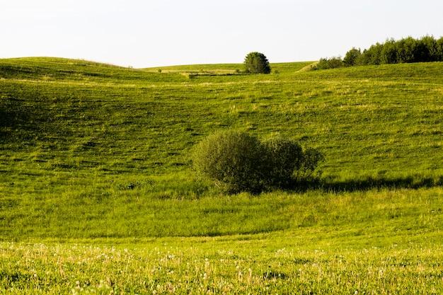 木々と緑の草と夏の風景