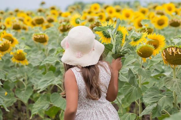 Summer little caucasian girl in hat, dress gathering sunflowers. sunflowers field. back view.