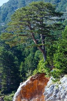Летний вид на перевал логара с соснами на склоне горы (албания)
