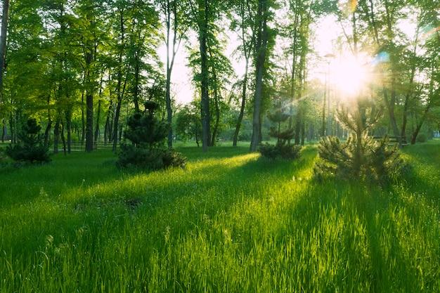 Летнее волшебное яркое утро в зеленом парке. молодая сочная трава и теплые солнечные лучи создают чудесную атмосферу.