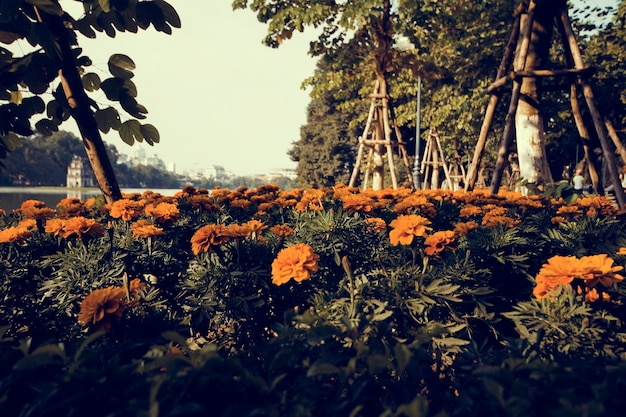 공원에서 여름 marigod 꽃 꽃