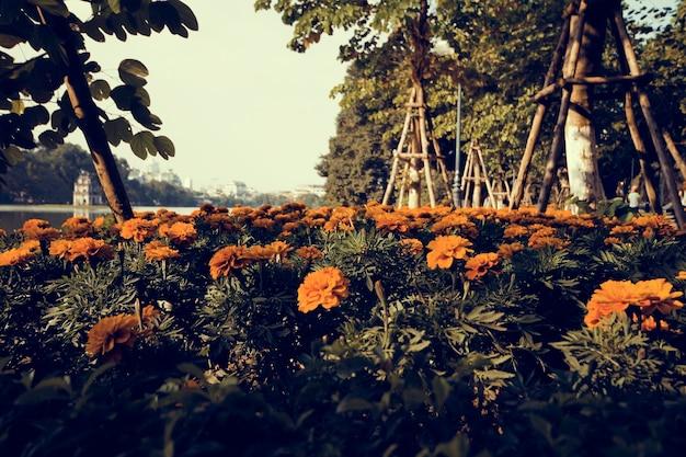 Summer marigod bloom flower in the park