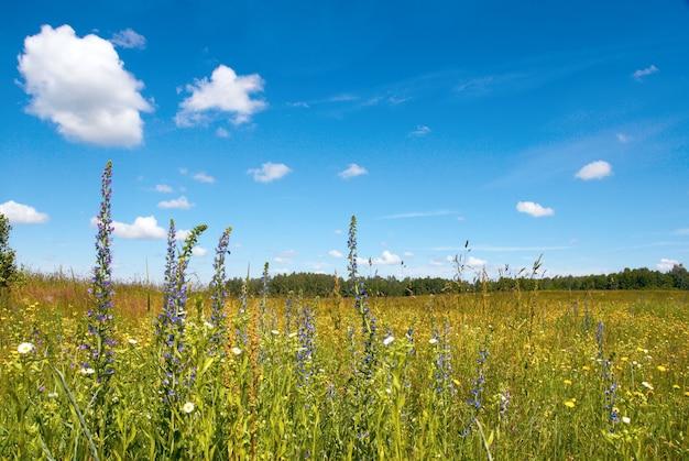 野花が咲く夏の牧草地。