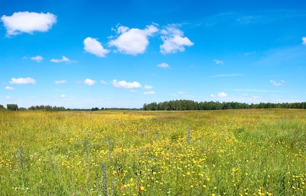 Летний луг с цветущими полевыми цветами.