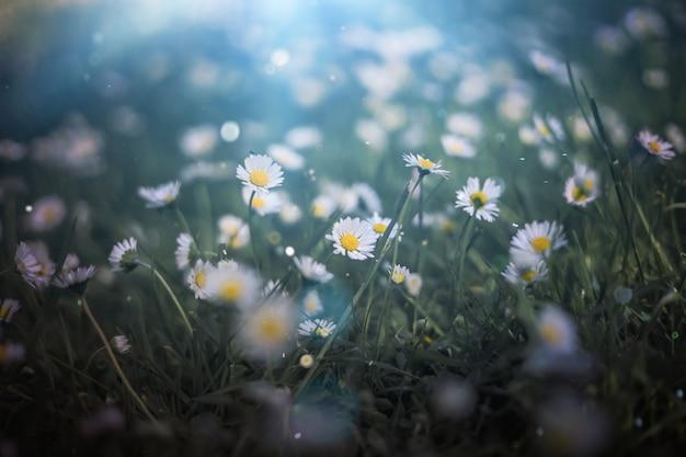 ヒナギク、自然の宝物がある夏の牧草地。緑の魔女の背景、神秘的な光のテクスチャ