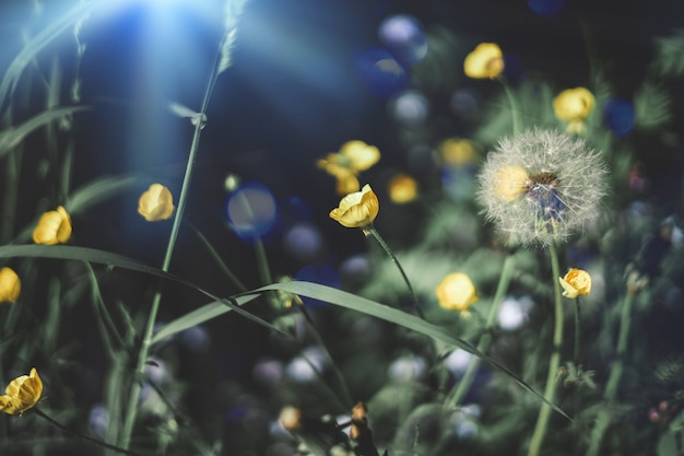 Summer meadow with daisies, natural treasures. green witch background, mystical light texture